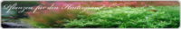 in vitro pflanzen f r den hintergrund g nstig kaufen rendo shrimp. Black Bedroom Furniture Sets. Home Design Ideas