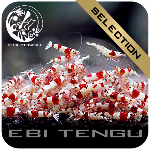 10x EBITENGU Red Bee PRL 'S'