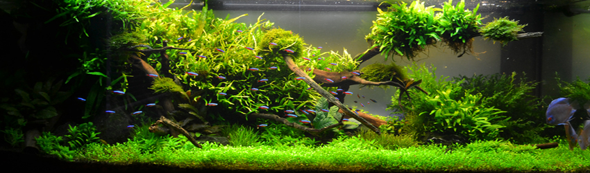 Aquascaping Weltmeister Adrie Baumann Rendo Shrimp Shop