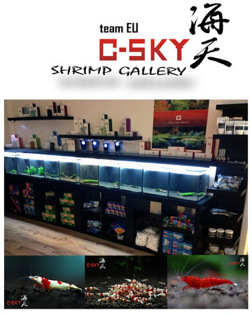 C-SKY Gallery in Bremen/Germany\\n\\n25.11.2012 17:13