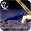 EBITENGU Blue Diamond Tiger