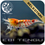EBITENGU Red Tiger Golden Eyes