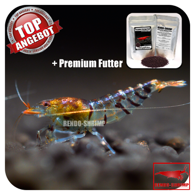 10x Tigergarnele Orange Tail + Premium Futter