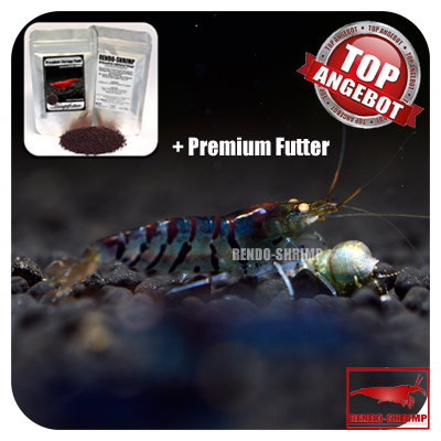10x Blaue Tigergarnele  'low-blue' + Premium Futter