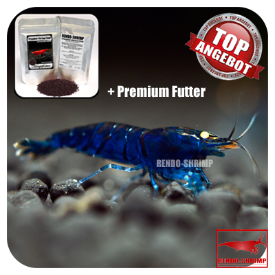 10x Blaue Tigergarnele 'high-blue' + Premium Futter