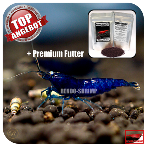 10x Royal Blue Tiger / Blue Diamond + Premium Futter