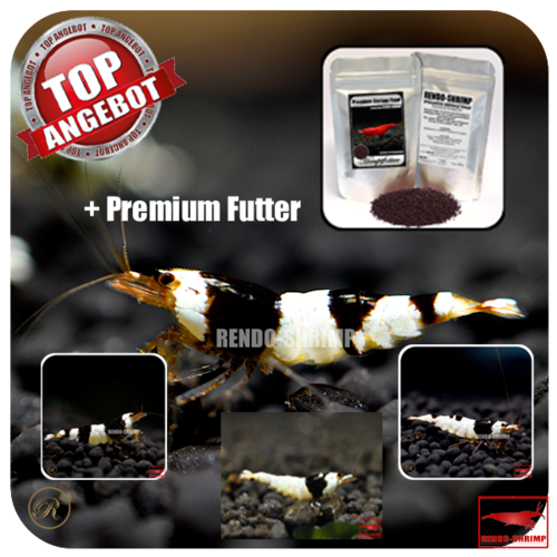 10x Black Bee Garnelen Mix + Premium Futter
